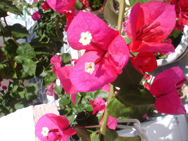 samos greece flowers